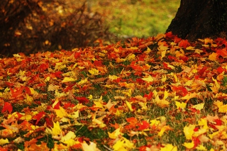 Red And Yellow Autumn Leaves Background for Android, iPhone and iPad