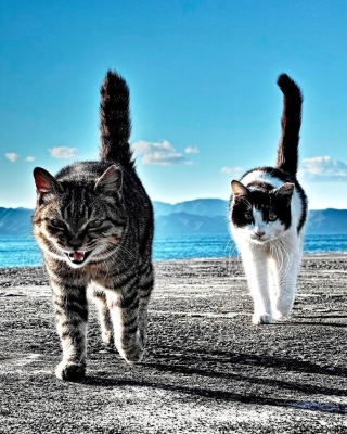Outdoor Cats sfondi gratuiti per iPhone 4S