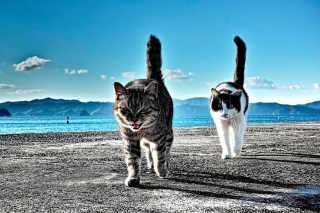 Outdoor Cats Background for Android, iPhone and iPad