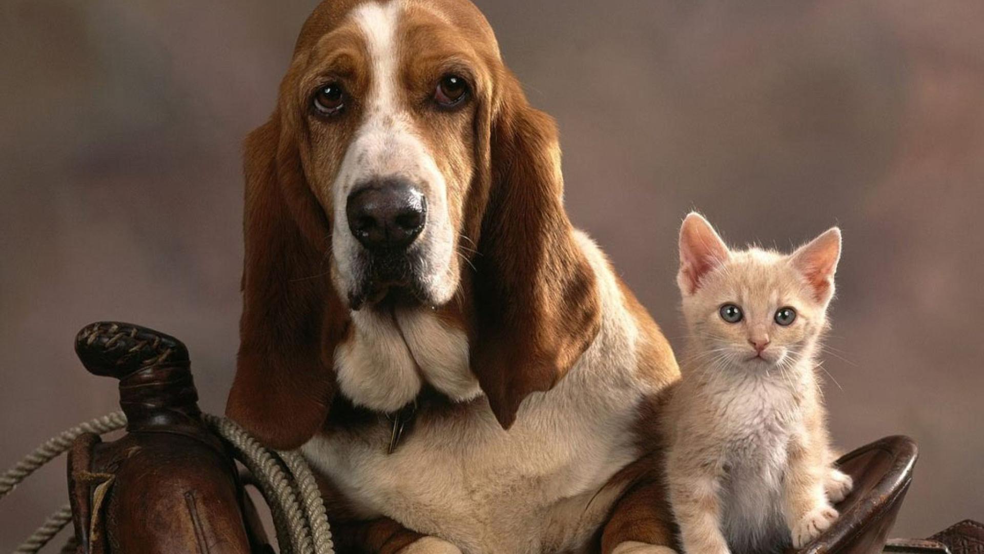 картинки на рабочий стол с собачками и котятами этом лучше говорить