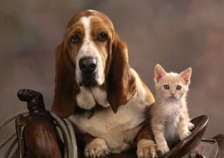 Basset Dog and Kitten - Fondos de pantalla gratis