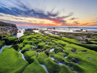 Pacific Ocean - Green Shore para LG 900g