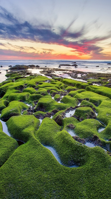 Pacific Ocean - Green Shore for Nokia C5-05