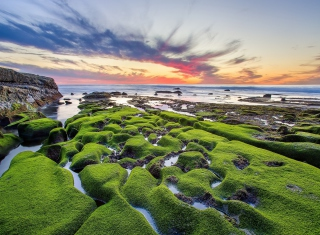 Pacific Ocean - Green Shore Background for Android, iPhone and iPad