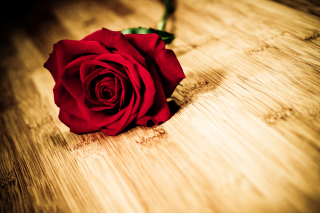 Red Rose Background for Android, iPhone and iPad