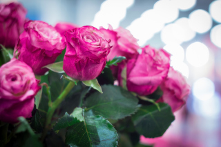 Pink Roses Bokeh Background for Android, iPhone and iPad