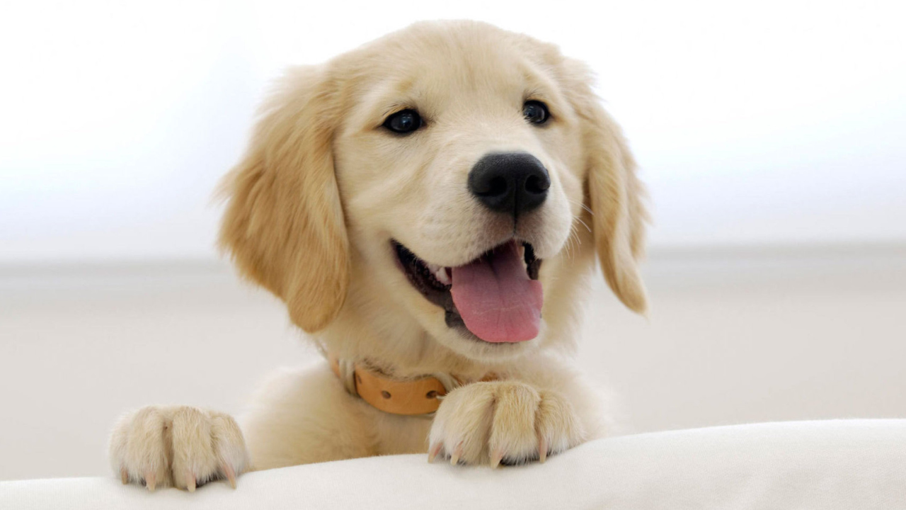 Cute Smiling Puppy