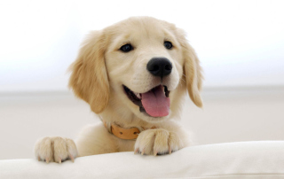Cute Smiling Puppy Wallpaper for Android, iPhone and iPad