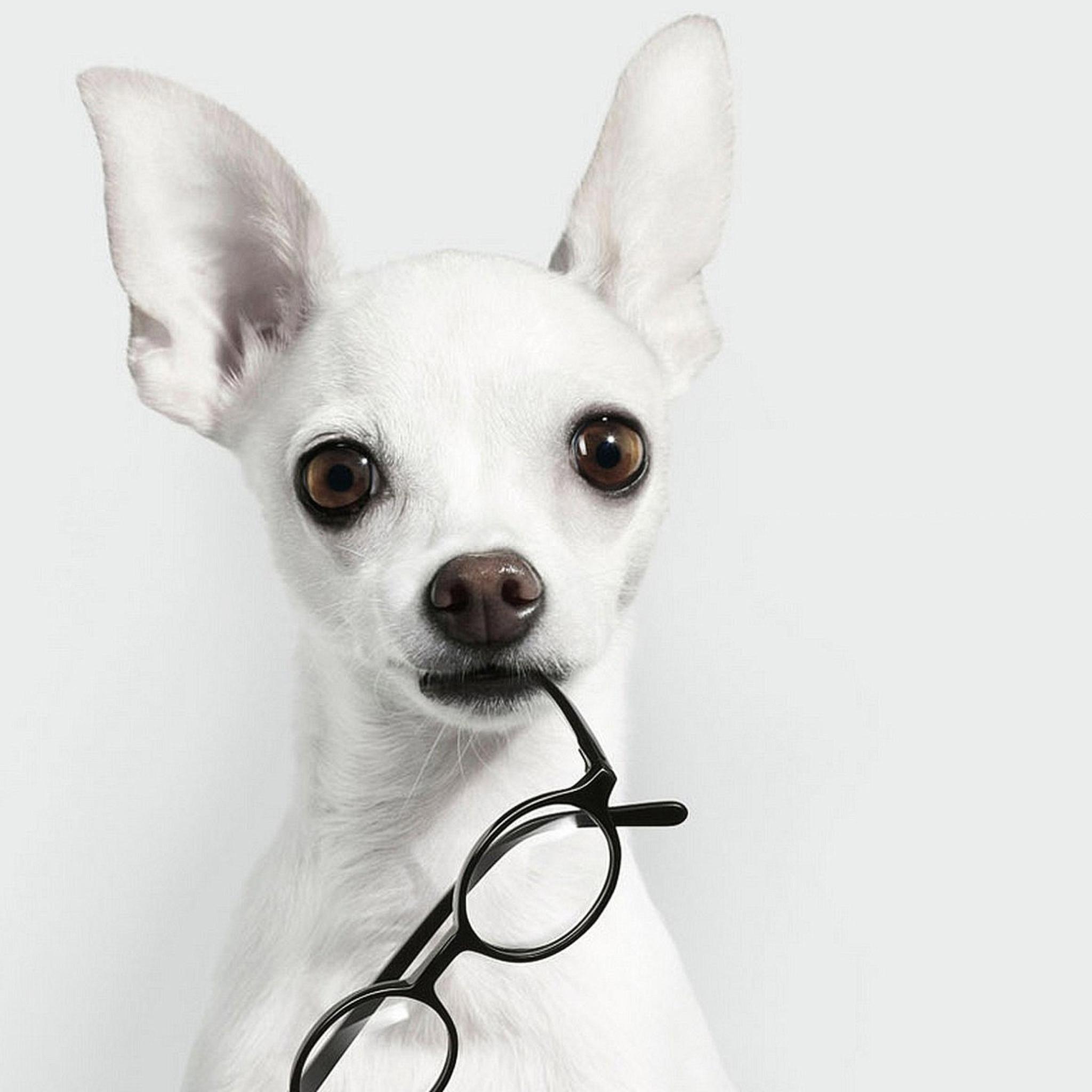 собака парик перчатки очки загрузить
