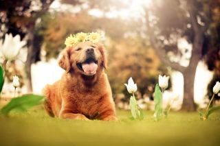 Ginger Dog With Flower Wreath Picture for Android, iPhone and iPad