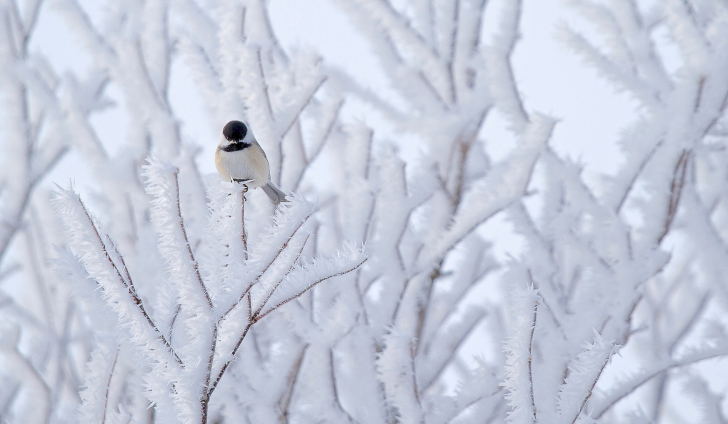 Screenshot №1 pro téma Small Winter Bird