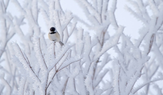Small Winter Bird Background for Android, iPhone and iPad