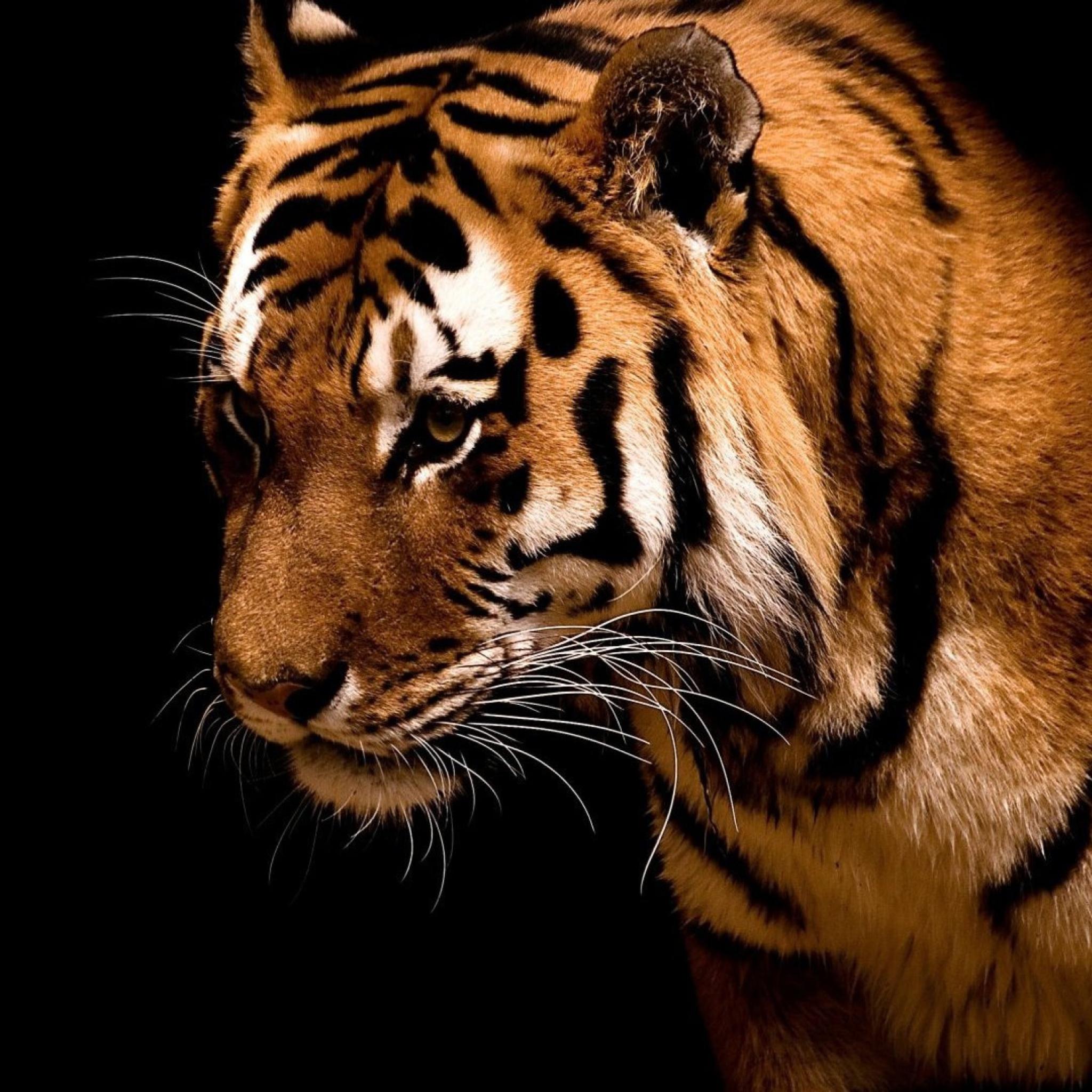 Картинки обложки тигр