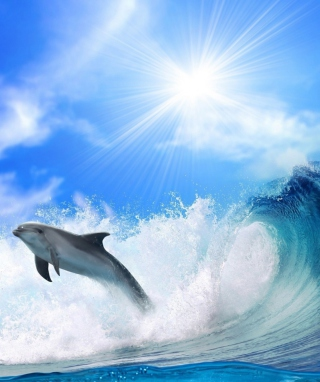 Free Dolphin Picture for iPhone 6 Plus