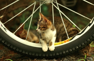 Free Taiwan Kitten Picture for Android, iPhone and iPad