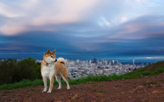 Dog And Cityscape sfondi gratuiti per cellulari Android, iPhone, iPad e desktop