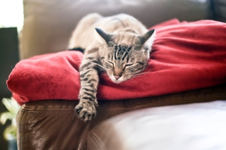 Cat Sleeping On Red Plaid Wallpaper for Android, iPhone and iPad