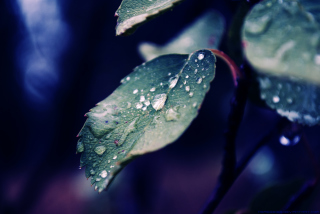 Rain Drops On Leaves Background for Android, iPhone and iPad
