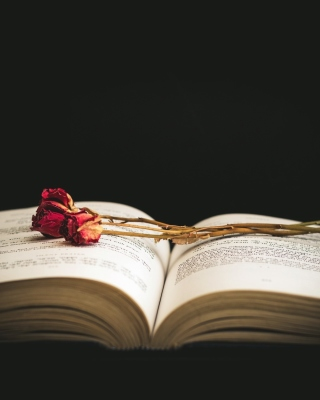 Rose and Book Wallpaper for 240x320
