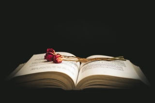 Rose and Book Background for Android, iPhone and iPad