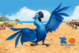 Rio, Blu Parrot Background for Android, iPhone and iPad