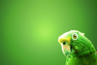 Green Parrot Wallpaper for Android, iPhone and iPad