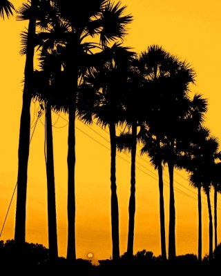 Sunset Palms Wallpaper for Nokia C1-01