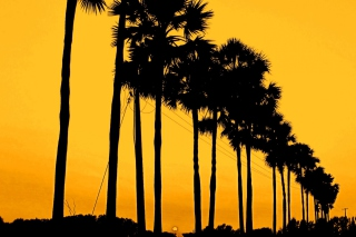 Sunset Palms Picture for Android, iPhone and iPad