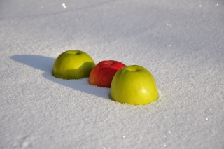 Apples in Snow Background for Android, iPhone and iPad