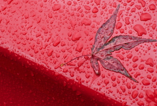 Kostenloses Rainy Red Autumn Wallpaper für Sony Xperia C3