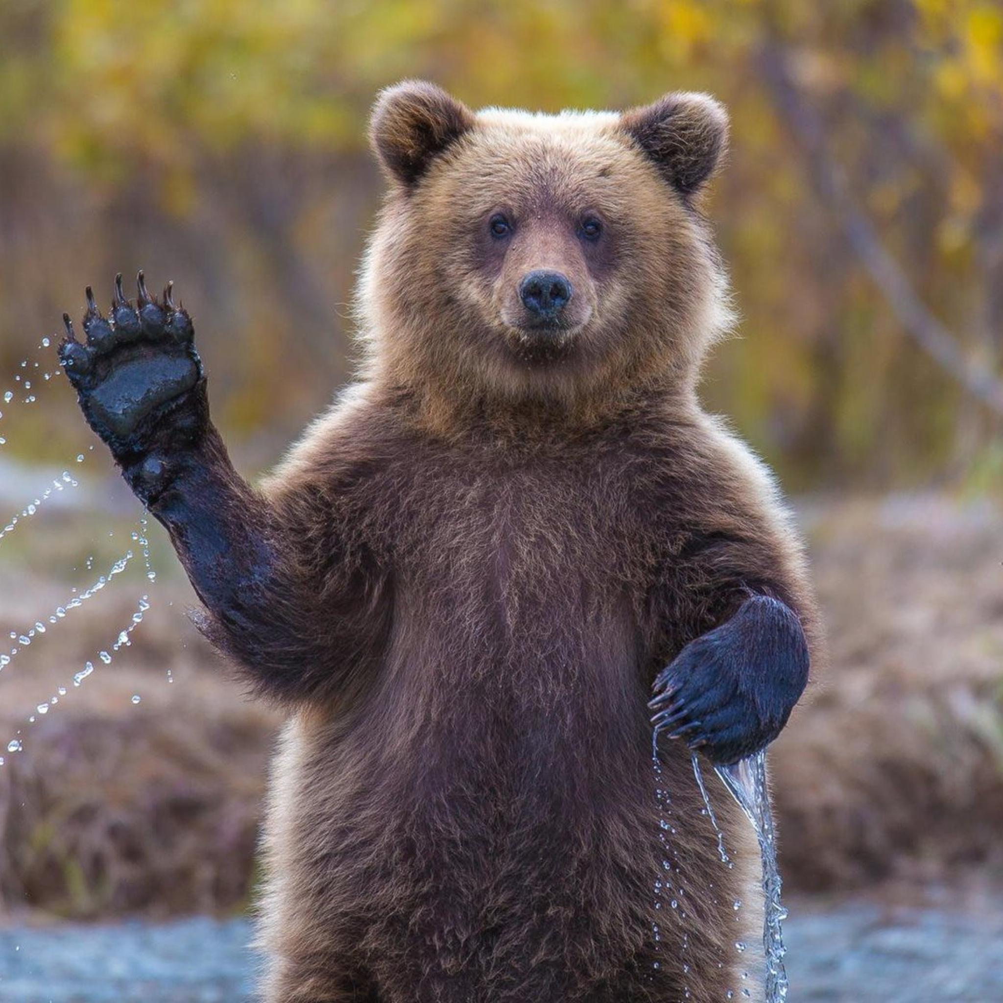 Прикольные картинки медведь россия