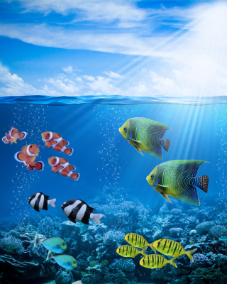 Horizon Colorful Sea World Wallpaper for HTC Titan