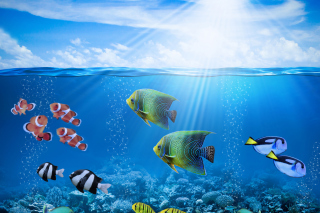 Free Horizon Colorful Sea World Picture for Android, iPhone and iPad