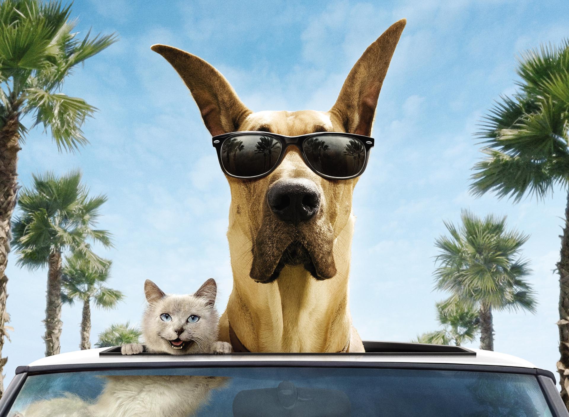 природа кот животное очки прикольное загрузить