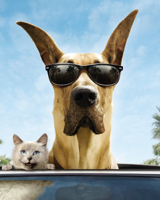 Funny Dog In Sunglasses - Fondos de pantalla gratis para iPhone SE