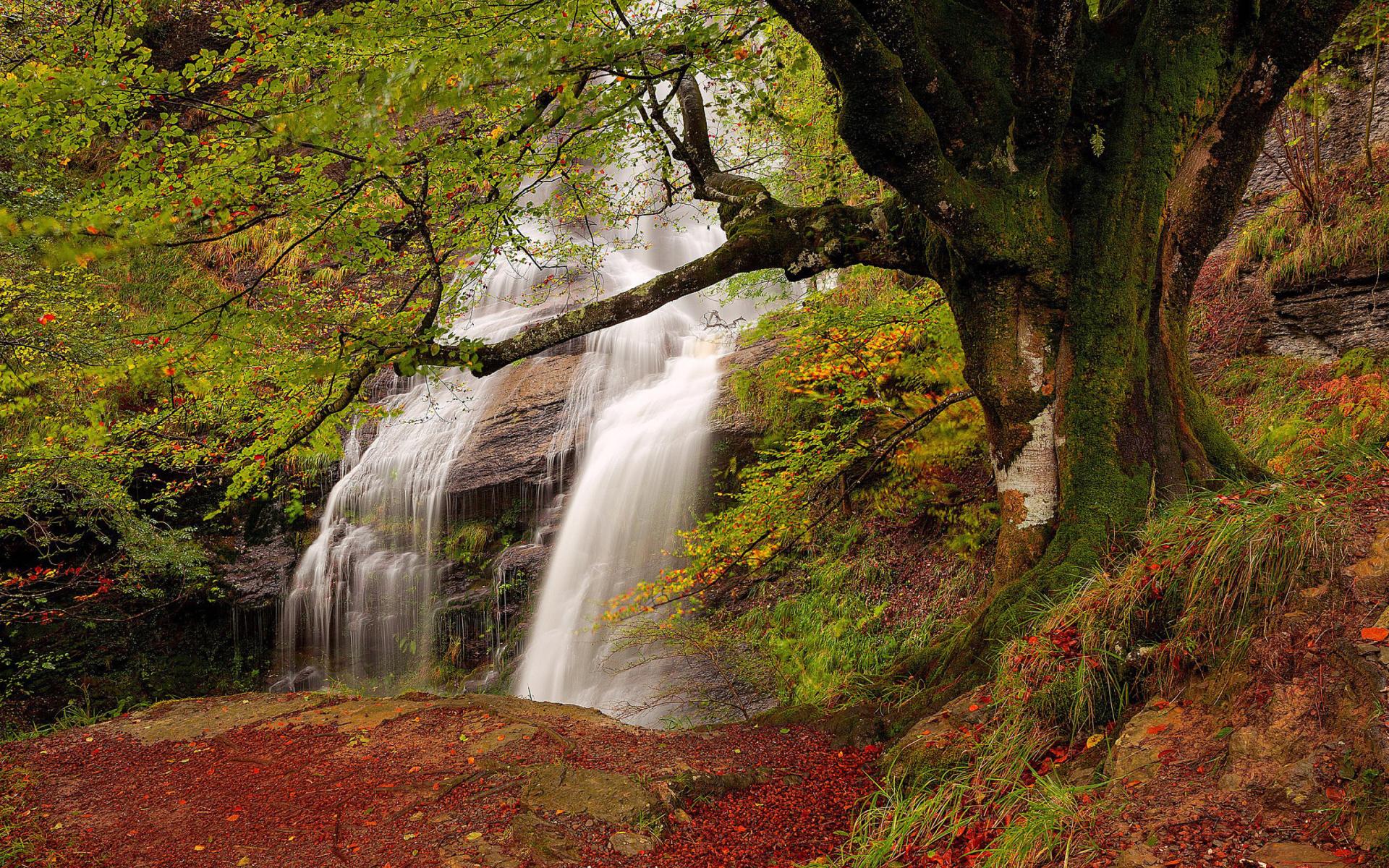 природа водопад деревья листья вода река загрузить