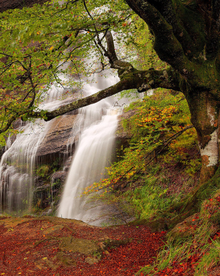 Path in autumn forest and waterfall Wallpaper for iPhone 6 Plus