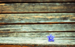 Free Little Blue Flower On Wooden Bench Picture for Android, iPhone and iPad
