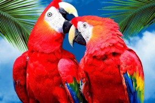 Love Parrots sfondi gratuiti per cellulari Android, iPhone, iPad e desktop