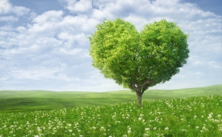 Free Nature Heart Picture for Desktop Netbook 1024x600