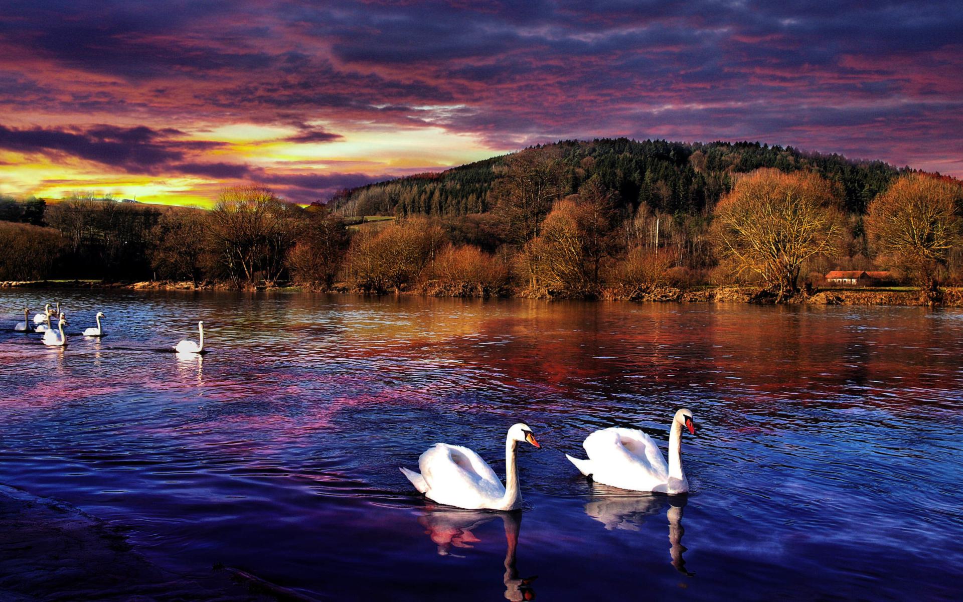 Swan lake wallpaper for widescreen desktop pc 1920x1080 - Swan wallpapers for desktop ...