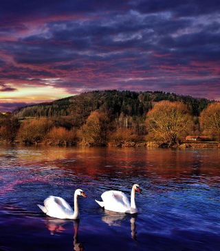Swan Lake Wallpaper for HTC Titan
