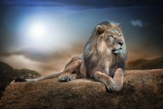 King Lion Wallpaper for Android, iPhone and iPad