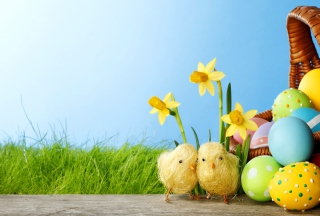 Yellow Easter Chickens Background for Android, iPhone and iPad
