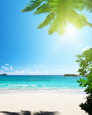 Vacation on Virgin Island sfondi gratuiti per 640x960