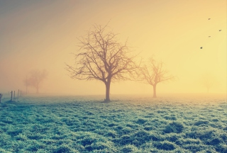 Free Misty Morning And Trees Picture for Android, iPhone and iPad