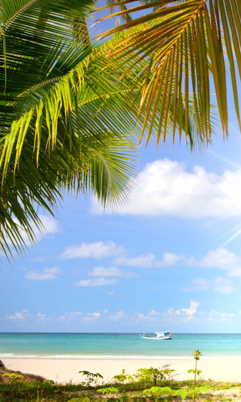 Summer Beach with Palms HD wallpaper 480x800