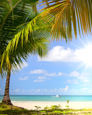 Summer Beach with Palms HD sfondi gratuiti per 640x960