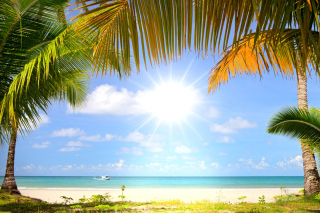 Summer Beach with Palms HD Picture for Android, iPhone and iPad