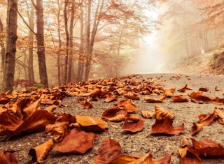 Mystic Fall Road Background for Android, iPhone and iPad